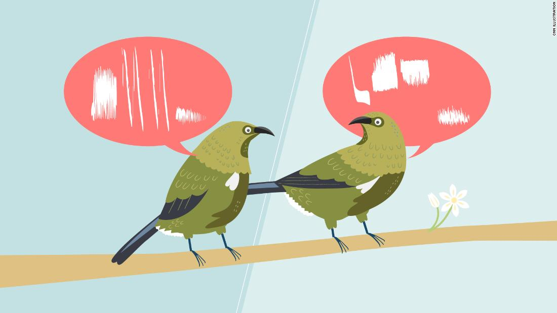 The birds do not sing the same song. They also have dialects