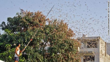 India has been using drones and fire engines to fight its worst locust invasion in nearly 30 years