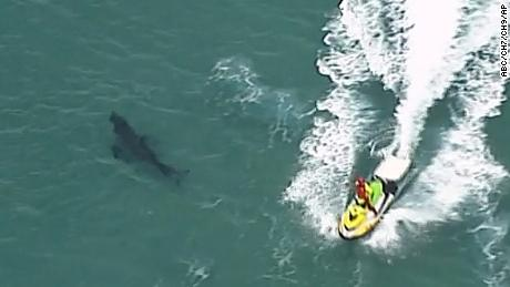 In this image taken from an aerial video, jet skiing passes over a shark swimming along the coast of Kingscliff, New South Whales, Australia, Sunday, June 7, 2020.