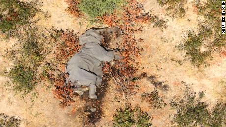 Images obtained from CNN show how many elephants lie
