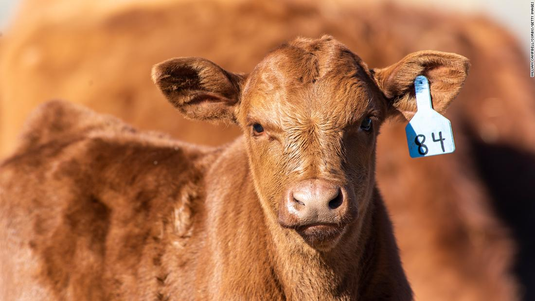 Burger King's latest sustainability effort: reduce cow farts