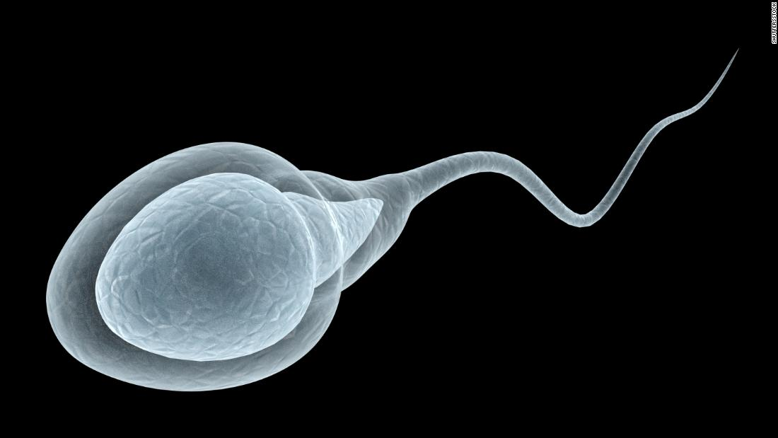 Human sperm roll like 'playful otters' as they swim, examine finds