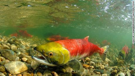 Warm temperatures threaten hundreds of fish species the world relies on, research reveals