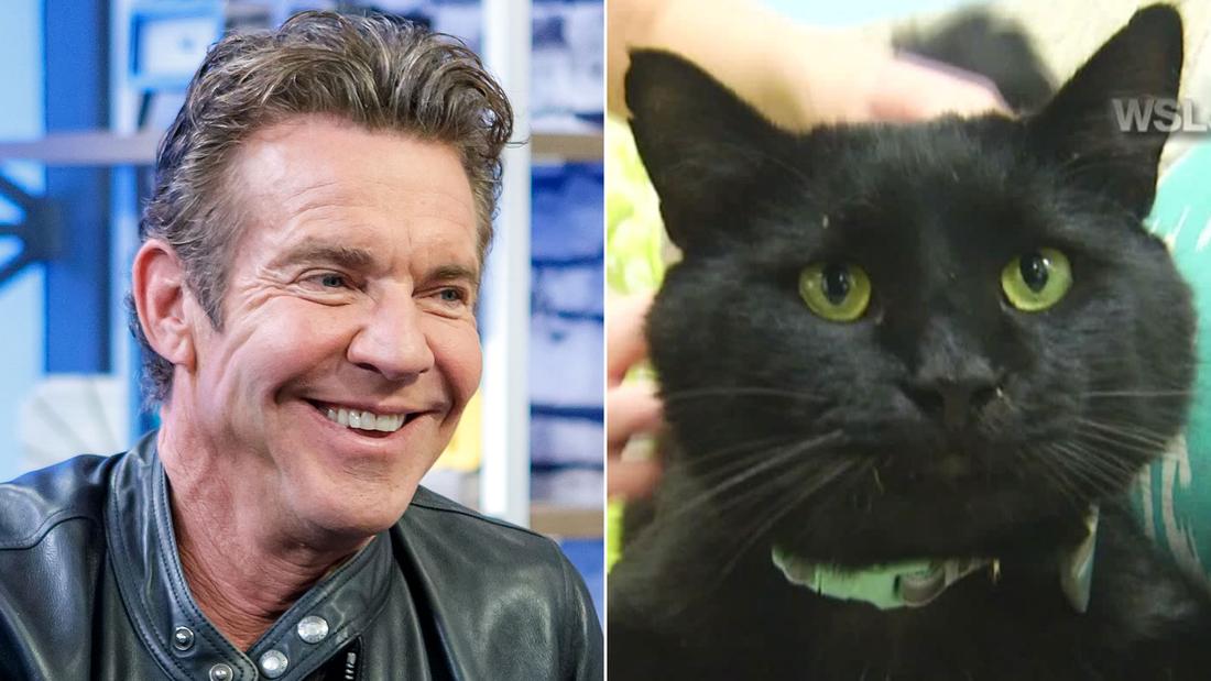 Dennis Quaid, the actor, adopts Dennis Quaid, the cat