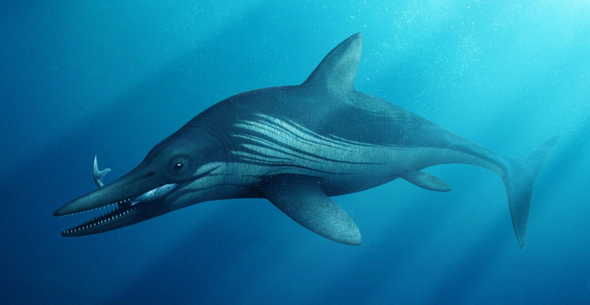 240M-calendar year-old 'megapredator' experienced 12-foot reptile in its stomach
