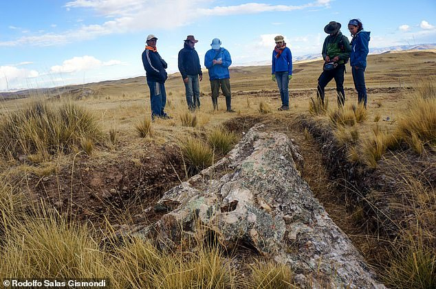 Large fossilised tree in Peru displays Andes environmental modify