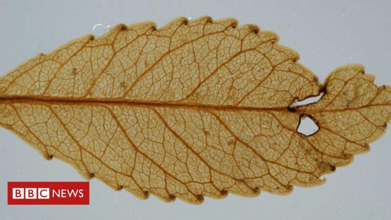'Mummified' plants give glimpse of Earth's future