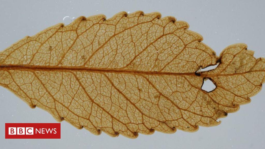 'Mummified' plants give glimpse of Earth's long term