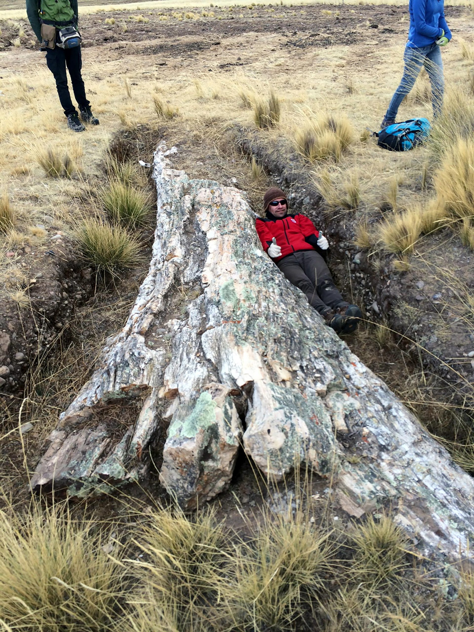 Spectacular Tale of Environmental Change Told by Historical Fossil Trees on Peru's Central Andean Plateau