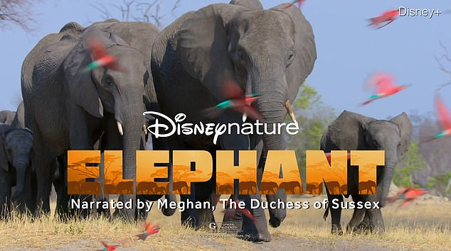 Meghan Markle recorded her version of the new Disney documentary The Elephant (pictured) this fall last year