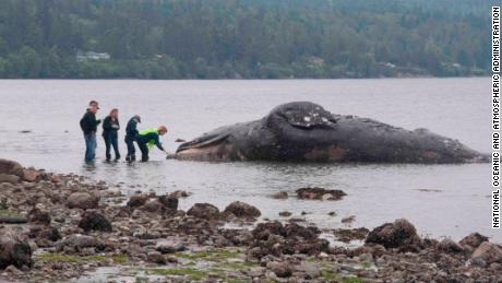 Landlords overlooking the waterfront in Washington state get an unusual request: take dead whales