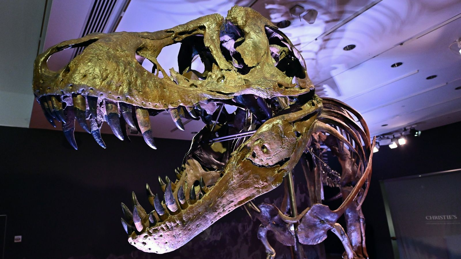 A study finds that the mass extinction 233 million years ago paved the way for dinosaurs Science and Technology News