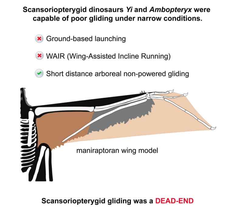 Ambopteryx Yi Summary of Findings