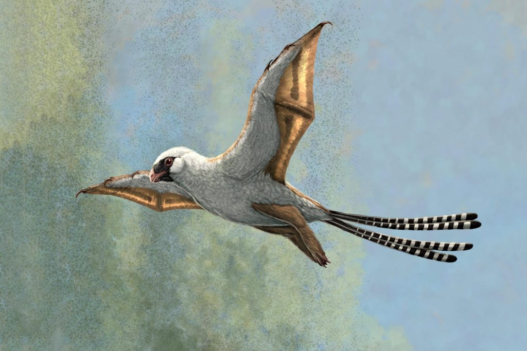 These two bird-sized dinosaurs developed bat-like wings, but they struggled to fly