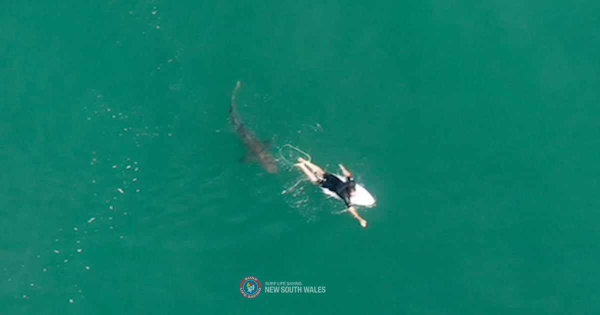 "Dramatic drone video showing a nearby surfer communicating with a shark: ""My heart just sank."""