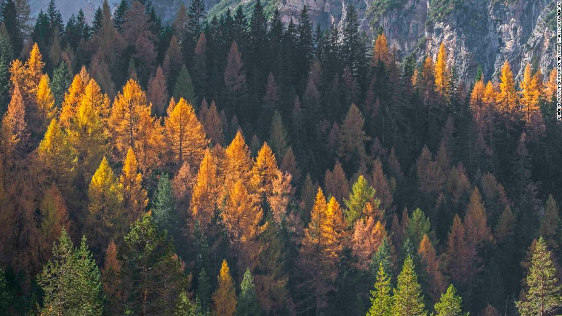Trees lose their leaves early due to climate change