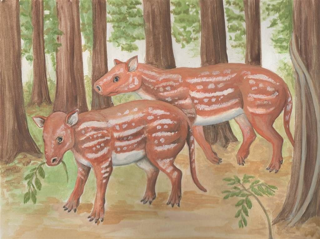 Horses and rhinos evolved from a strange hoofed animal in India: a study