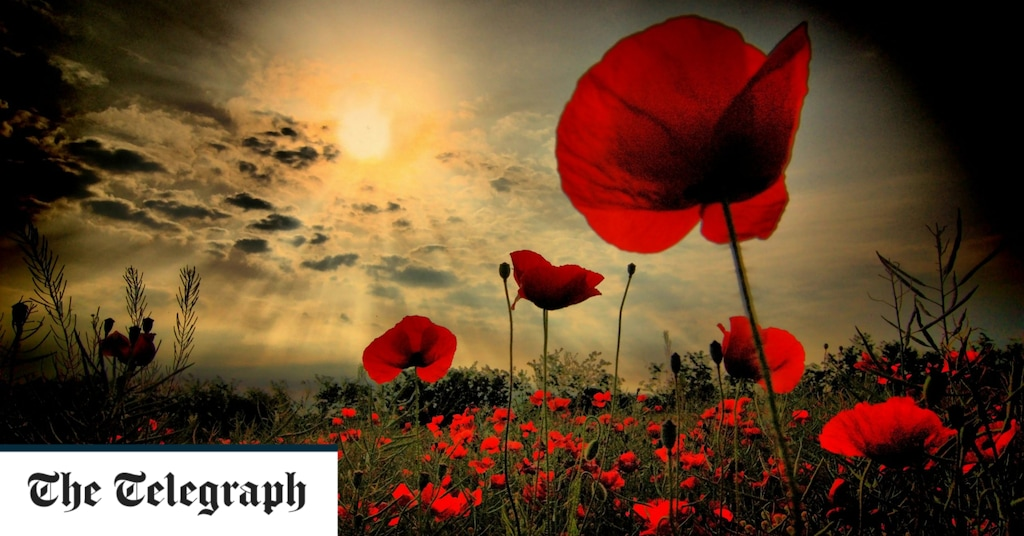 Poppies and ceremonies and why the act of remembering is important