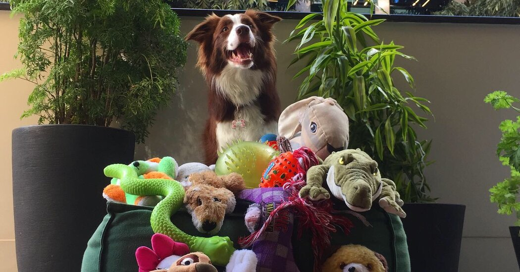 Who will win the Genius Dog Contest?  Watch the start of the competition