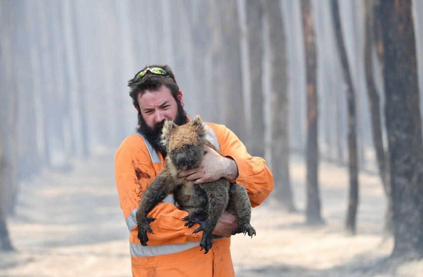 Scorched earth: Australia's wildlife continues to suffer