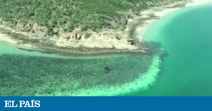 The Great Barrier Reef in Australia suffers from high temperatures |  Global World Blog