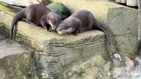 Otter Pumpkin and Harris at SEA LIFE Scarborough