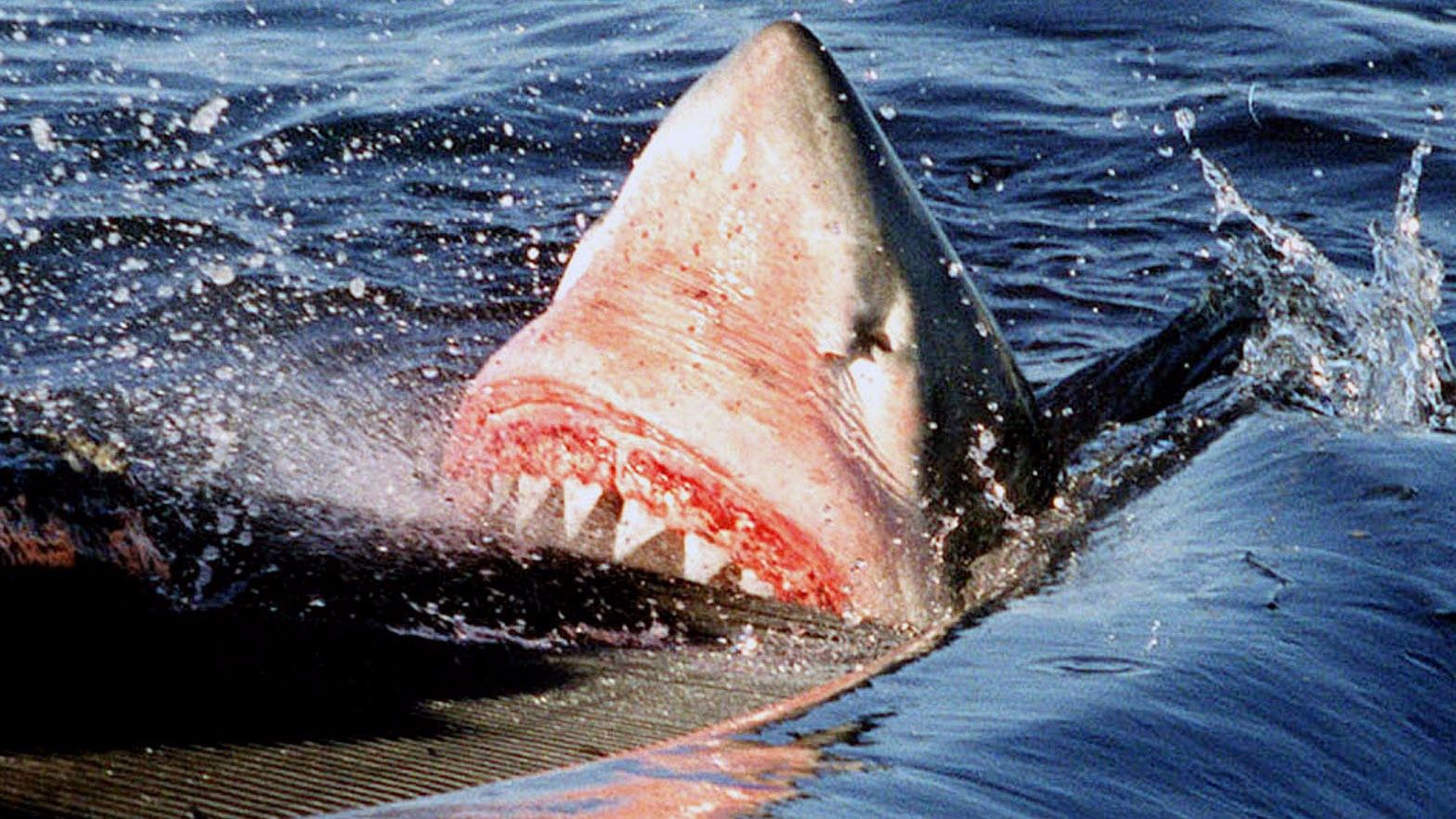 A shark attacks a man in Australia