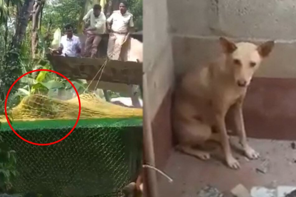 The tiger escaped from the men despite their nets.  The dog did not dare to leave the village after the tiger had gone away.