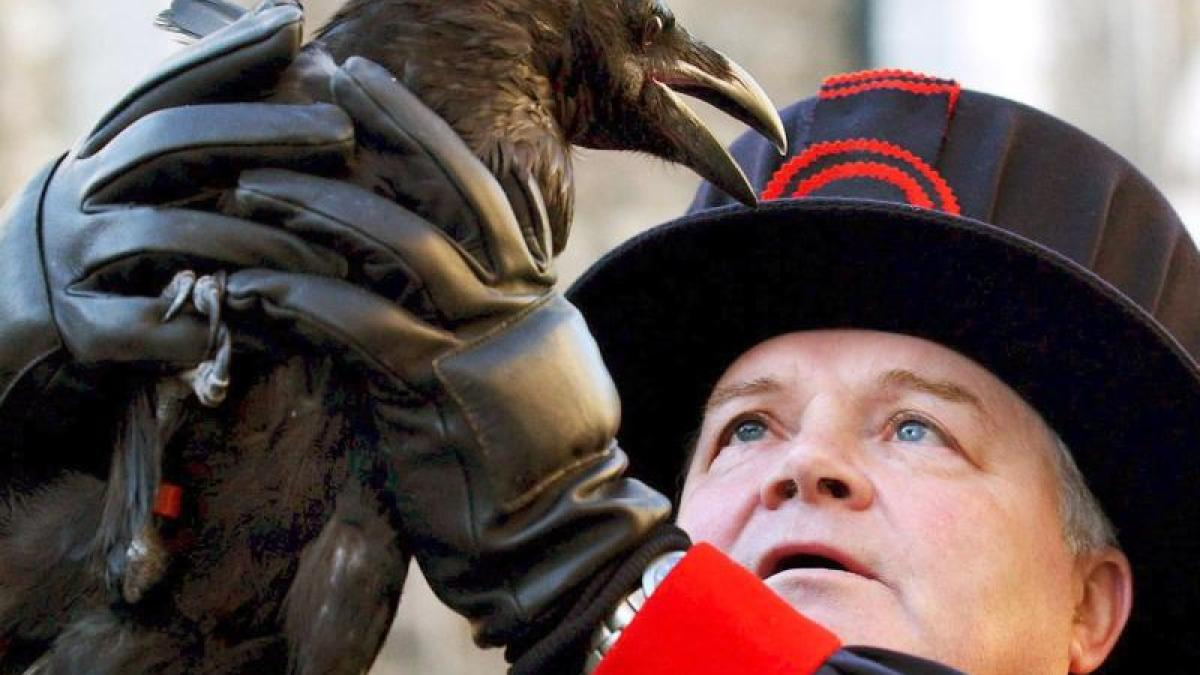 Slightly closer to death: the Tower of London loses a raven