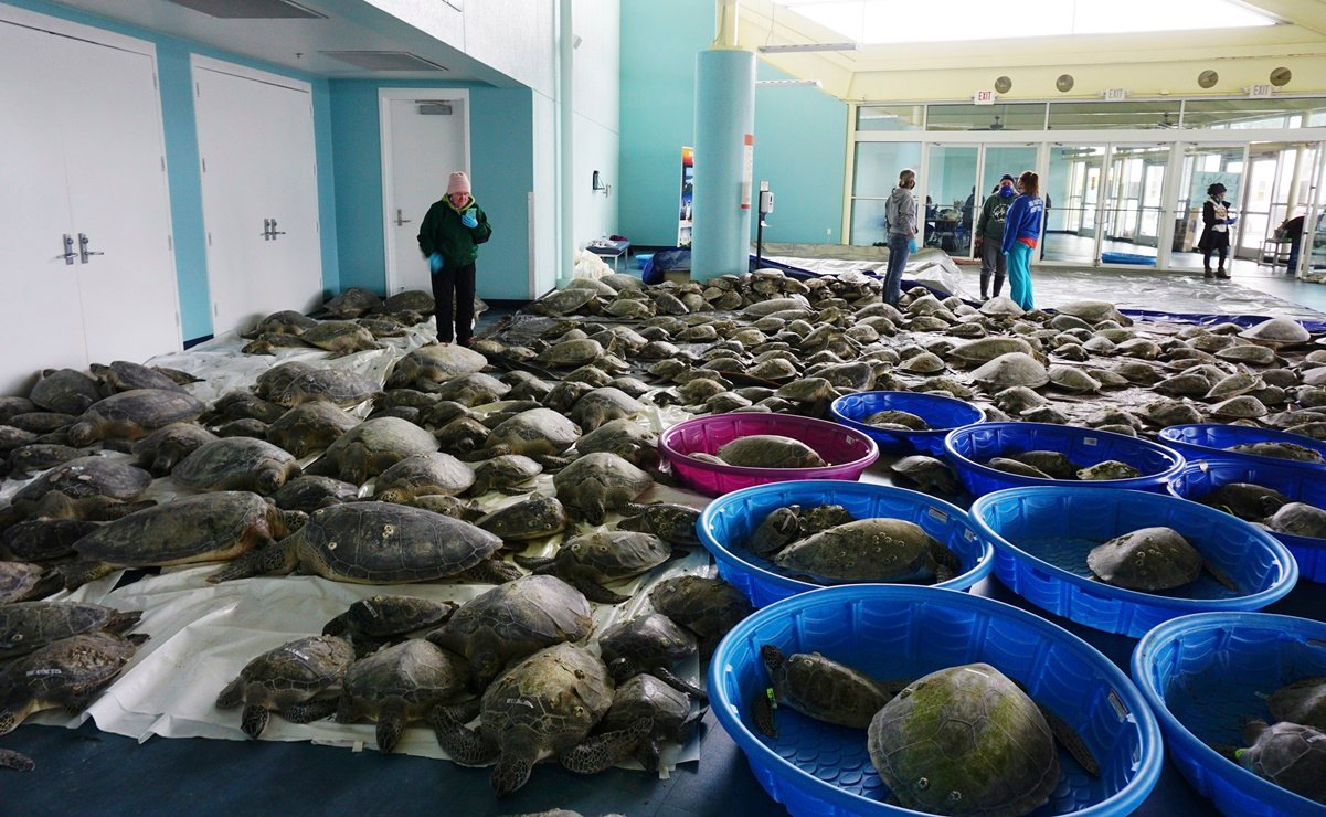 Texas.  Save thousands of distraught turtles in the United States