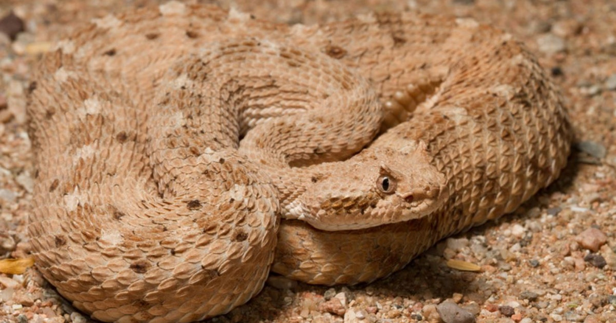 What the skin of snakes reveals about how they move