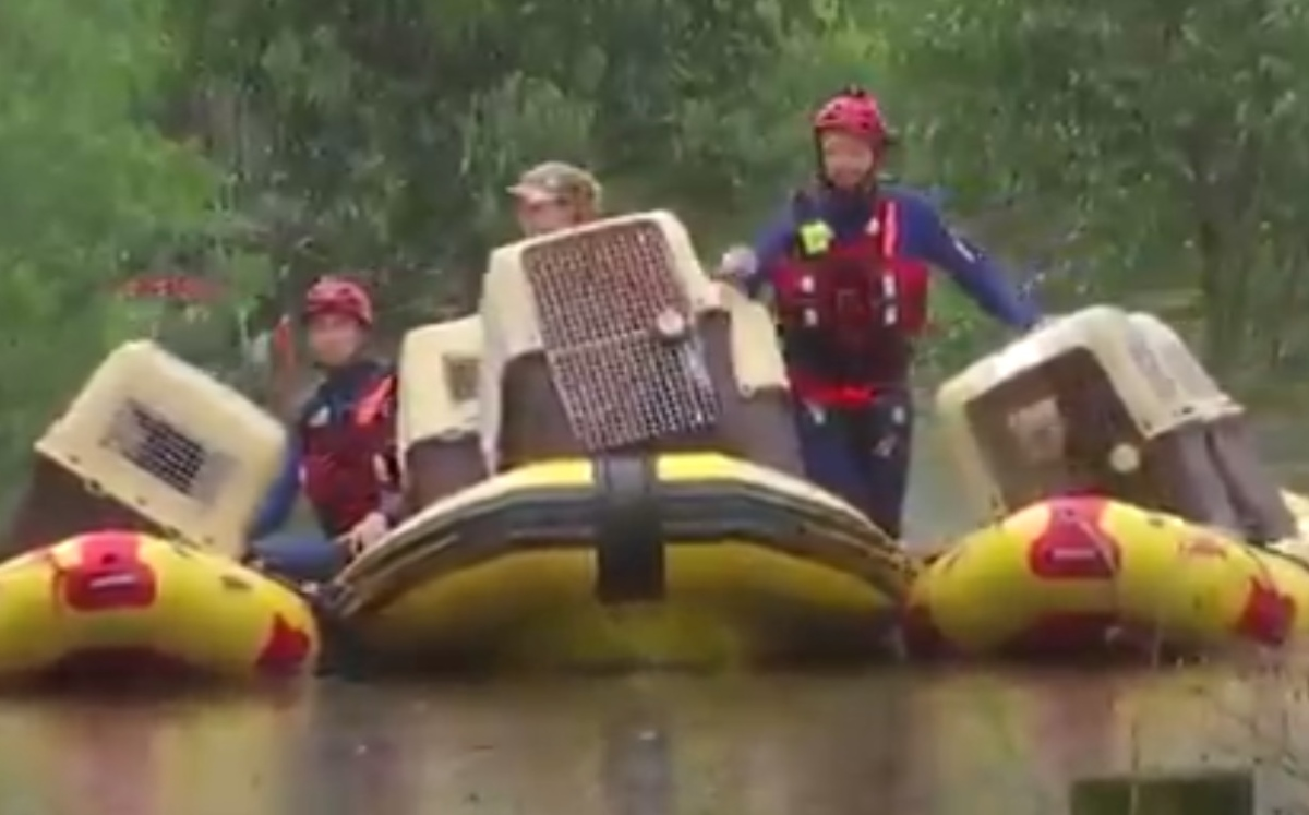 Australia.  Save 20 dogs from floods (video)