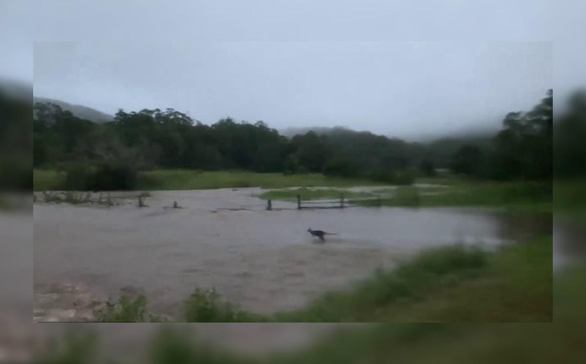 Kangaroo Surviving Flood in Australia: Video