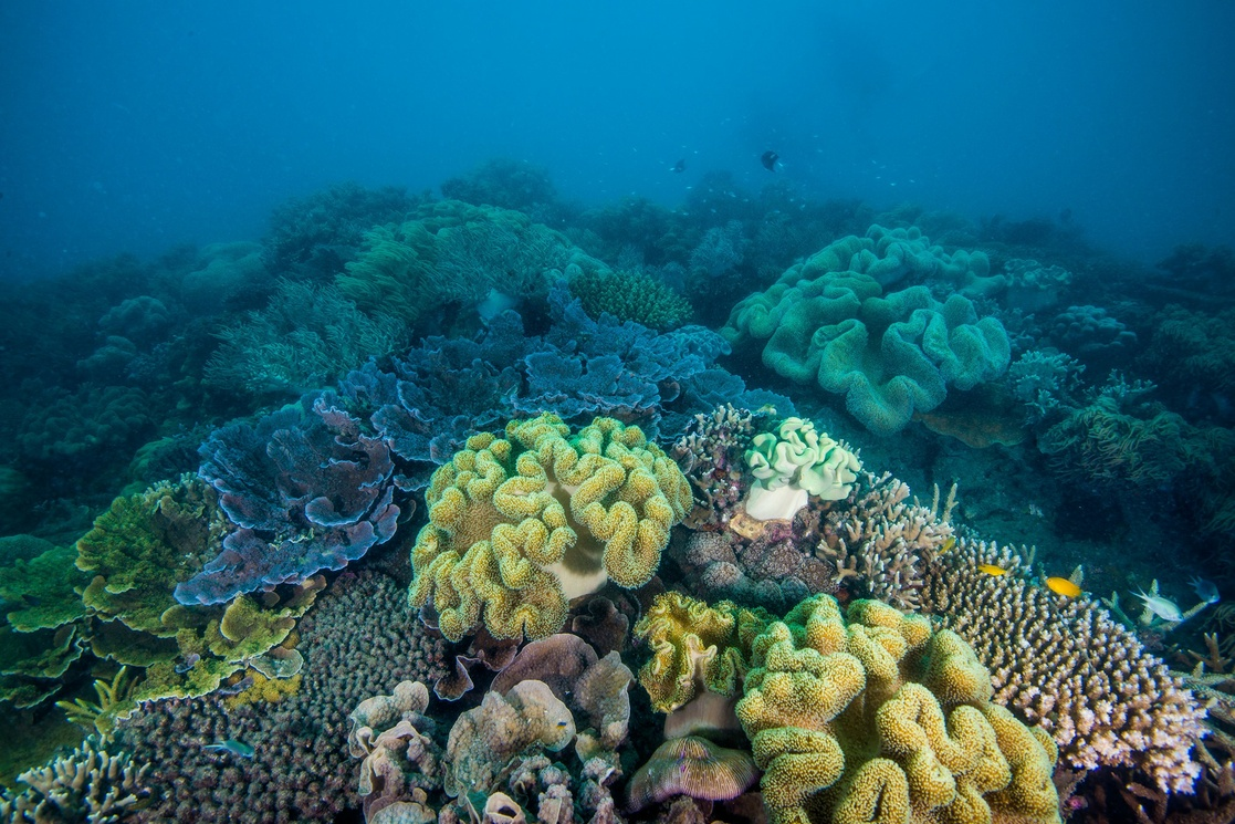 "La Jornada – They seek to ""delay 20 years"" the disappearance of corals in Australia"