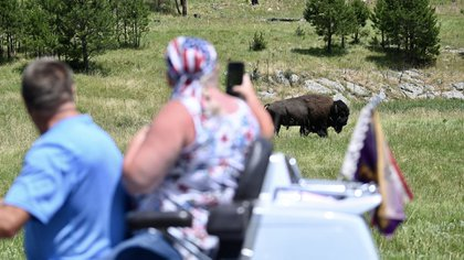 Tourists on a motorcycle take pictures of an American bison near Custer, South Dakota, in the Black Hills National Forest, July 8, 2020 (Photo by Eric Paradat / AFP)