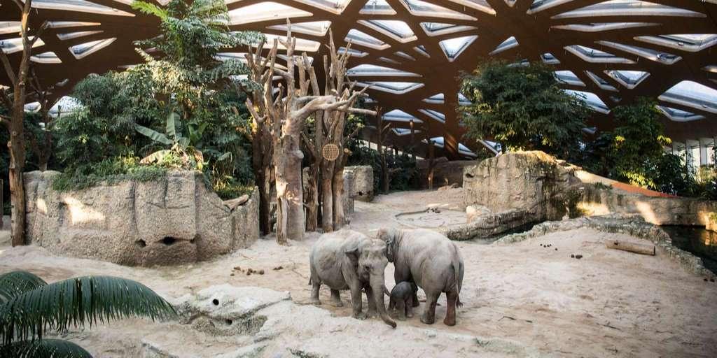 Zurich Zoo joins the #unitedforbiodiversity alliance