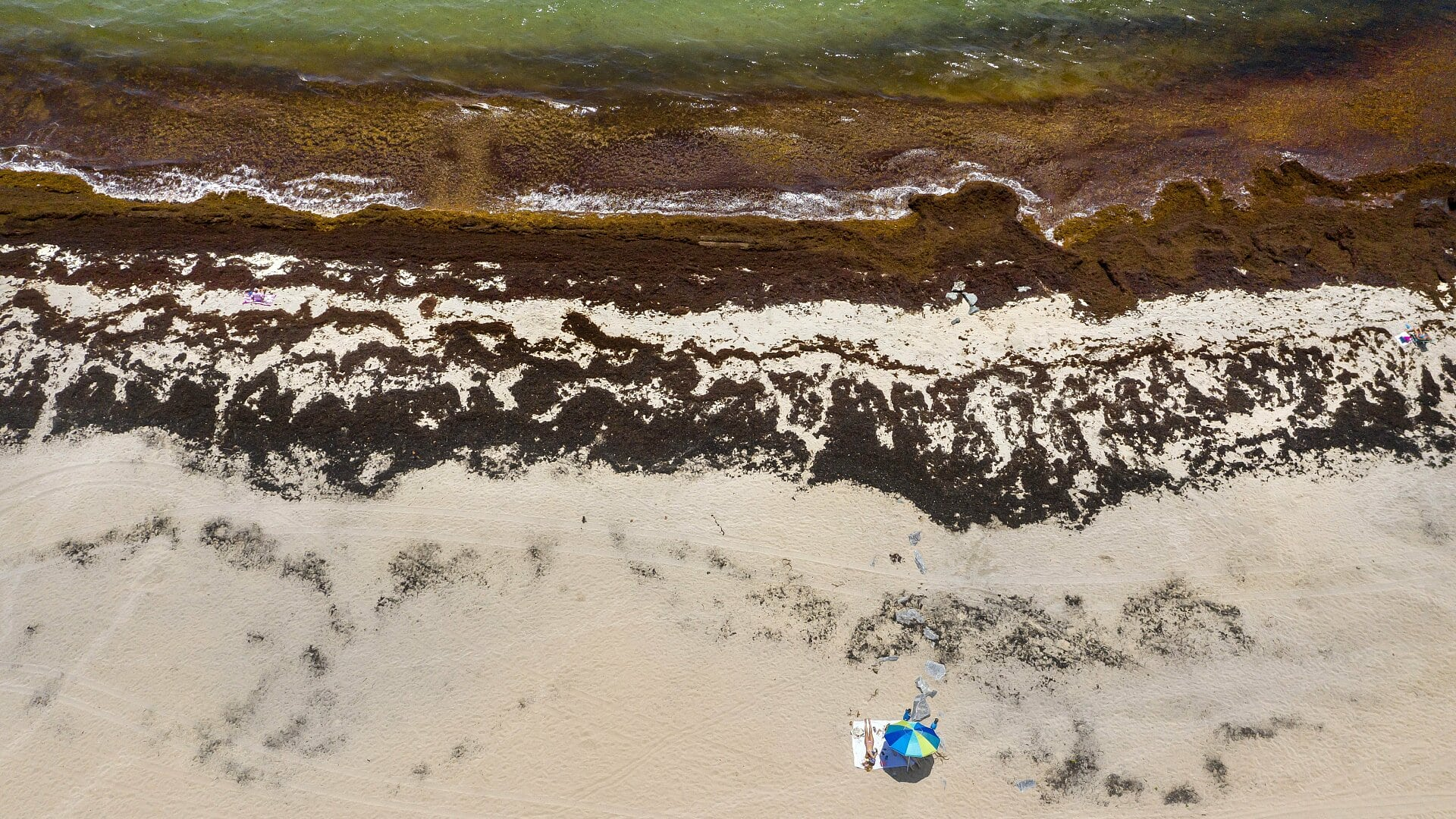 Environment: The world's largest seaweed field casts doubt on climate correction