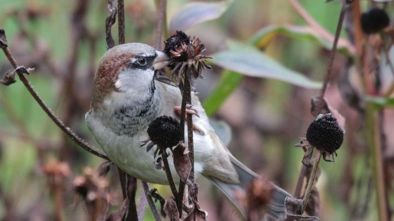 Science – Number of birds: 1.6 billion birds and only 3,000 kiwis – knowledge