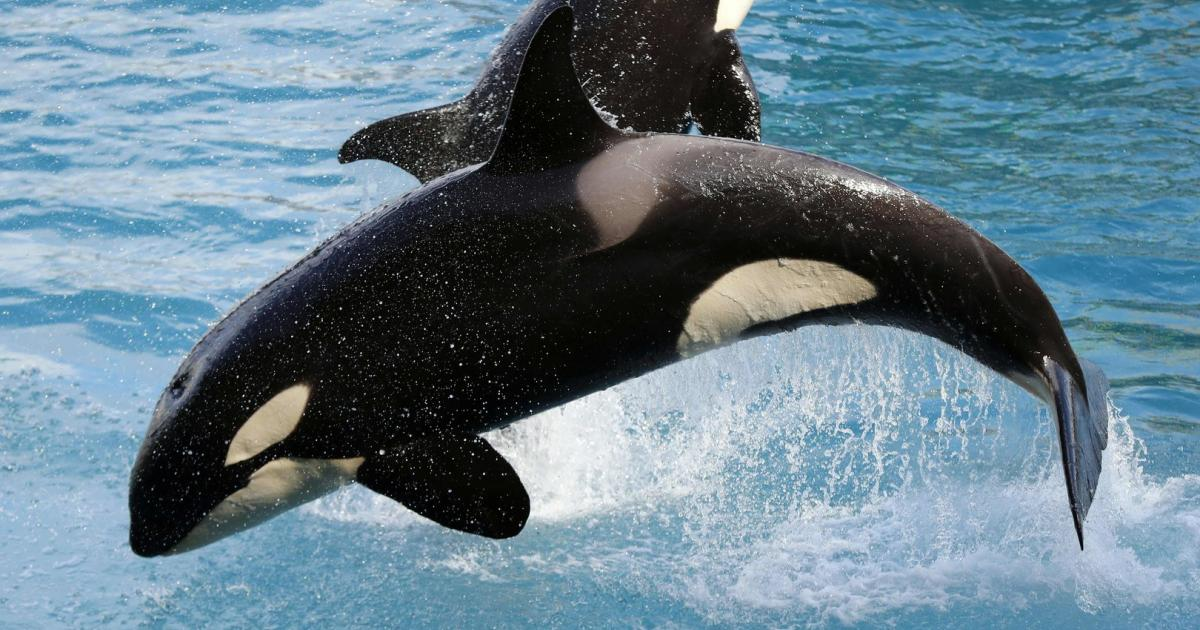 Two orcas spotted off the beaten track in southwest England