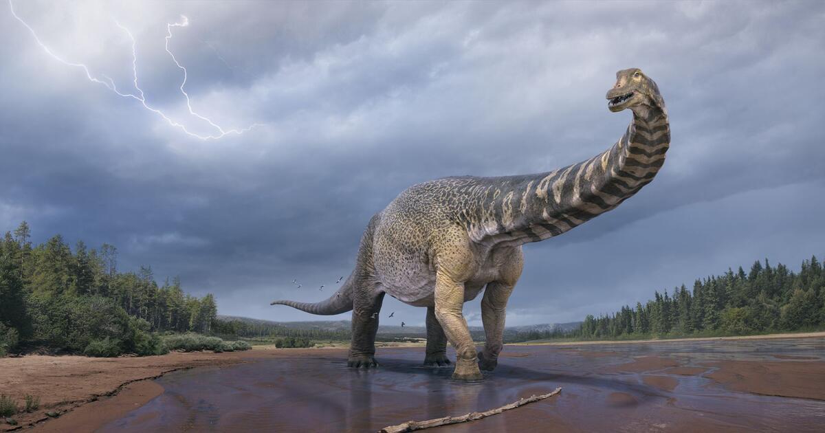 Cretaceous Titan: New species of dinosaur identified in Australia