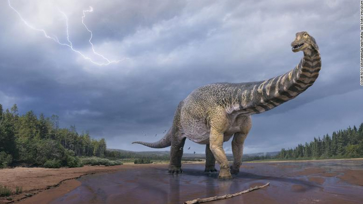 Australia's largest dinosaur is a new species, and that's a measurement