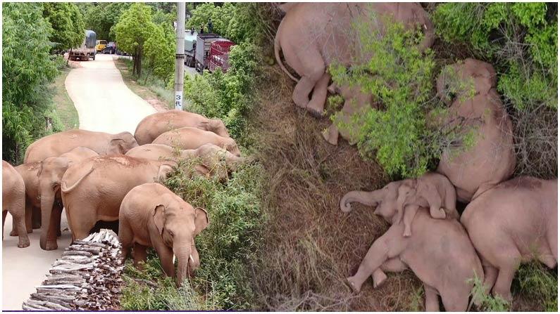 Elephant's Long Journey Unheard of in China