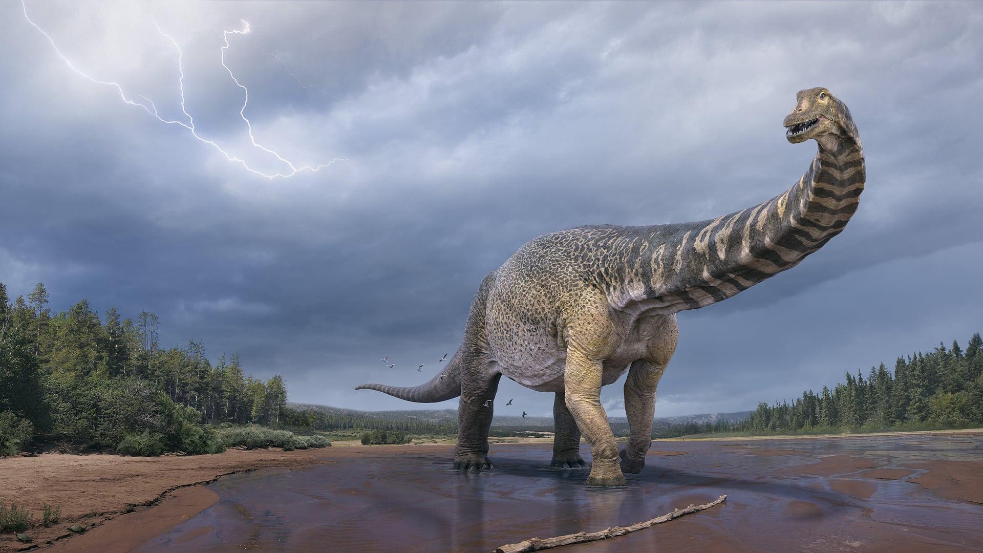 Australotitan coprensis: a new titanium dinosaur from Gondwana
