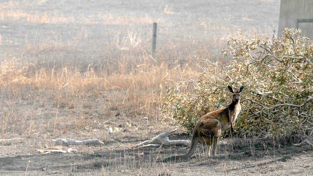 Climate change: Impacts in Australia – government action urged