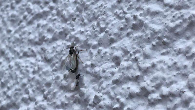 Ant disaster in Heilbronn: pest control speaks volumes
