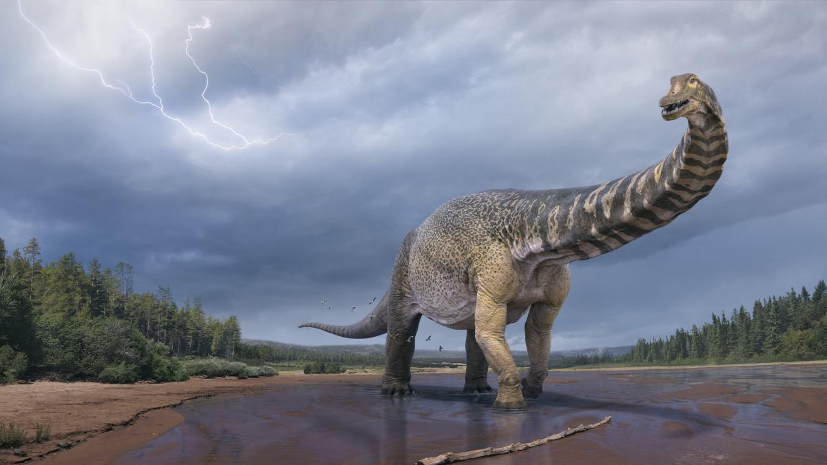 Titanosaurs: Researchers found the largest dinosaur in Australia