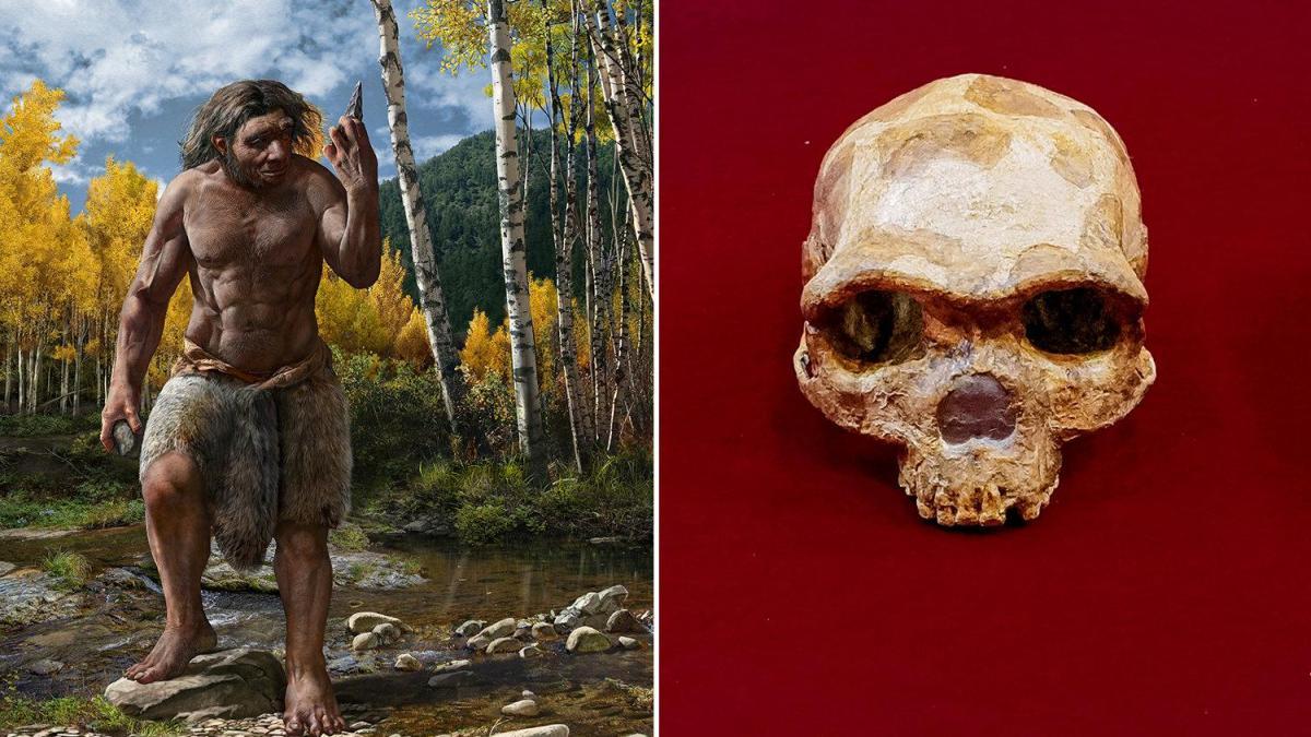 Harbin's skull probably belonged to a new species of human, Homo longi