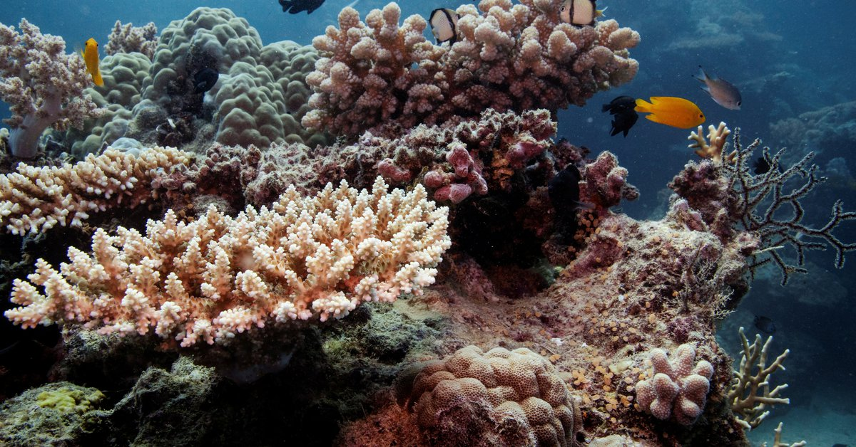 Australia will oppose UNESCO's plan to declare the Great Barrier Reef in danger despite its critical situation due to climate change