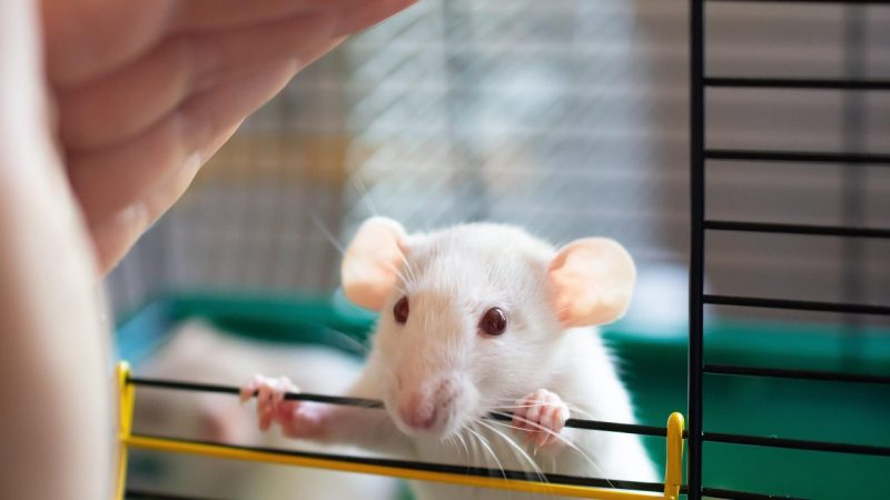 Of mice and humans |  jewish general