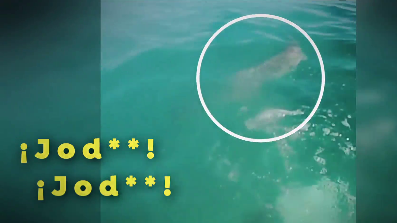 Shocking moment when a swimming surfer escapes from a shark on the beach